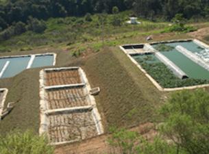 Wetland - Estação de Tratamento de Efluentes da Cidade de Bragança Paulista: 5 Litros por Segundo
